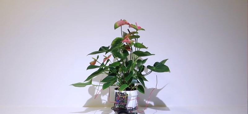 Megcsinálták a virágcserepet, amelyikben soha nem fog elhalni a növény – fotó