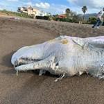 Hosszú és gyötrelmes halál vár a műanyagot benyelő bálnákra