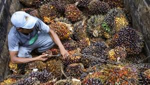 Megelőzné a következő járványt? Mondjon le a pálmaolajról!