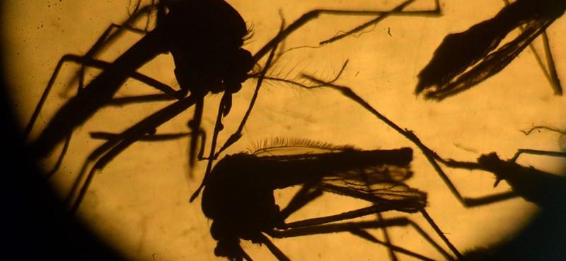 Már az oroszoknál jár a zikavírus