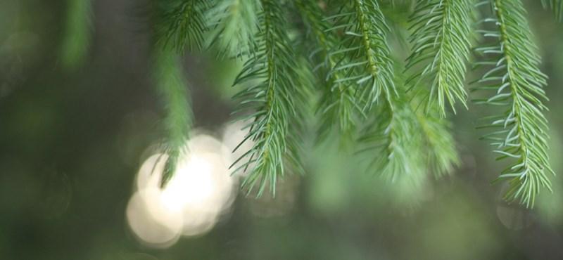 Blikk: Pezsgő és fenyőfa miatt csukhatnak le magas beosztású NAV-dolgozókat