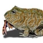 Dinókat ehetett egy közel félméteres ősi béka