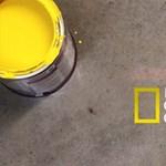 National Geographic logó fényből, festékből, folyadékból (videó)
