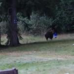Fotók: Medve vetett véget a pikniknek Erdélyben, vitte a hűtőtáskát is