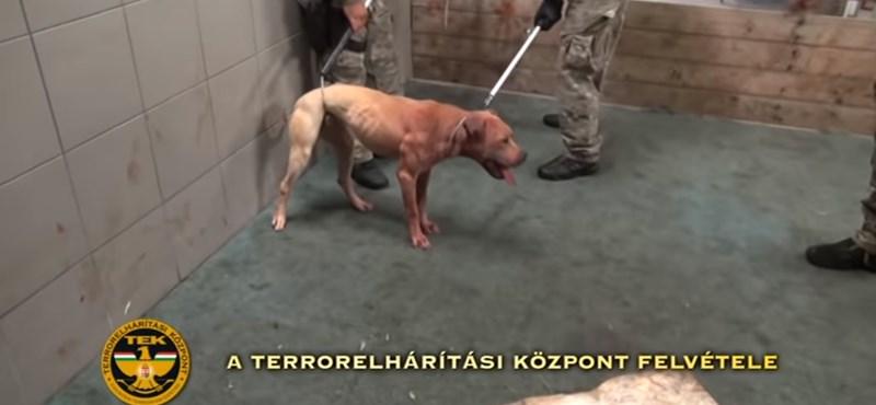 Kutyaviadal szervezőit fogta el a TEK Mohácson