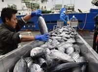 Védett cápák, tengeriuborkák, vidrák