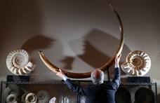 Ilyen a mamutagyar-vadászat sötét oldala