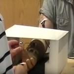 Műkézzel is lehet érezni, igazi áttörést jelenthet az új bionikus kar