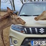 Mennyit fogyaszt az új hibrid Suzuki Vitara? Kipróbáltuk