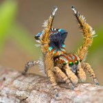 Csodálatosan szép új pókfajtát fedeztek fel