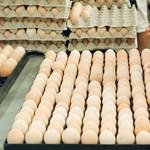 Ön se dőljön be: kamu a NAV által agyonbírságolt tojásárus néni sztorija