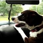 A legnyugisabb kutya is vérebbé változik az ablaktörlőtől – videó