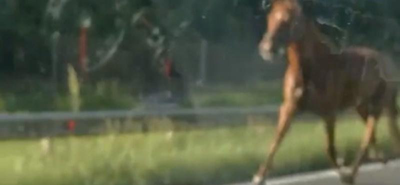 Lovak szabadultak el az M7-es autópályán