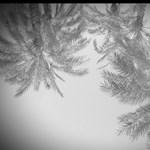 Nem nehéz: különleges fekete-fehér képeket készíthet a telefonjával