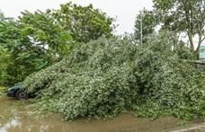 Kidőlt fák, leszakadt vezetékek maradtak a vihar után