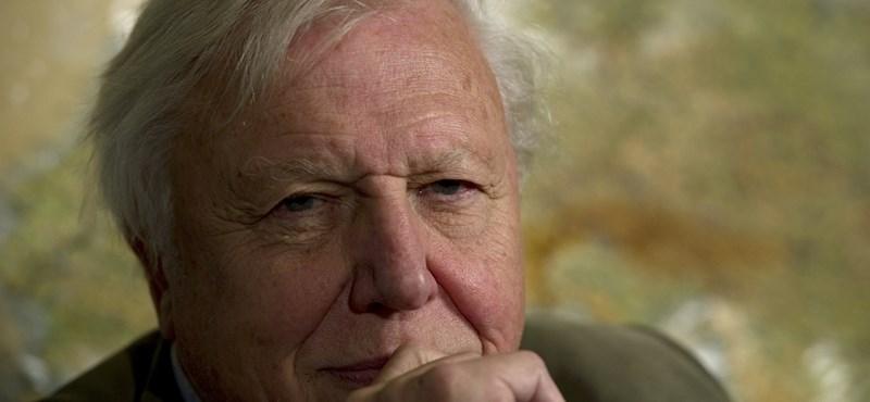 Ma is serényen dolgozik a legendás természetfilmes – David Attenborough 90 éves lett