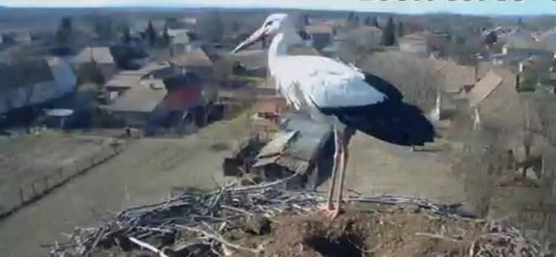 Biztosnak tűnik, hogy elpusztult az ország kedvenc gólyája