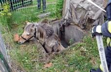 Fotók: Vízaknából szedtek ki egy lovat a tűzoltók Zala megyében