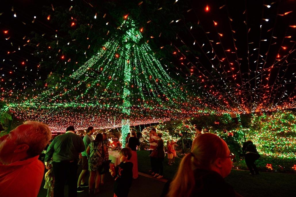 epa. Karácsonyfaégő-rekord Ausztráliában - Canberra, 2013. november 26.