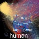 Látványos a bizonyíték: minden állatnál több vírust kapnak el az emberek