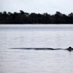 Örökre eltűnt több mint harminc állatfaj idén, az elveszett cápa is köztük lehet