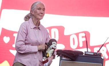 Jane Goodall egy meglepő helyszínen is felbukkant Budapesten
