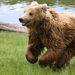 Kilövetik a náluk élő medvék és farkasok ötödét a szlovének