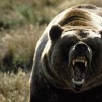Grizzlyket talált a család a kertjében, az anyamedve pedig bepöccent