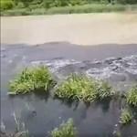 Megkezdődött az olajszennyezett anyagok elszállítása Szigetszentmiklósról