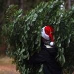 Itt van, mi lesz a kidobott budapesti karácsonyfák sorsa
