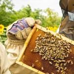 Jön, jön, jön: Tóta W. és a méhek kereszténydemokrata jövőképe