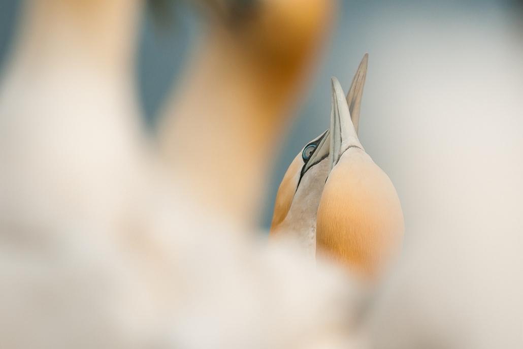 NE_! - Üdvözlő érintés - Az Év Természetfotója 2014, nagyítás