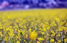 Nekivetkőzhetünk, igazi tavaszi időjárást ígérnek péntekre