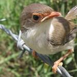 Te tudod, mi az a madármegfigyelés?