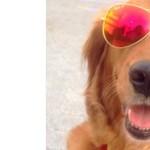 Kutyabarát helyek: szerelem, misszió, reklámfogás vagy üzlet?