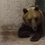 Ne kergesse a medvét, és a szelfizést is felejtse el