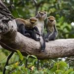 Áramszünet miatt majmok és madarak fagytak halálra egy texasi rezervátumban