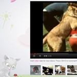 Kikapcsolódás hétvégére: cukiságok videói