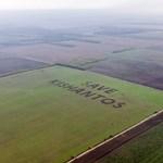 Greenpeace: törvénytelenül aratnak Kishantoson