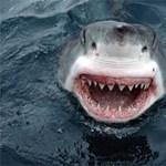 Fürdőzőket kóstolgatnak a cápák