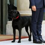 Belepirult Macron a kutyája produkciójába – videó