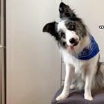 Magyar kutatók döntik el, melyik kutya érti a legjobban az emberi szavakat