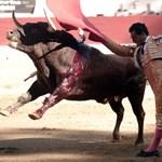 Tüdőn döfte, megölte a bika a neves torreádort (fotók)