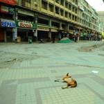 """""""A kiürült indiai utcákat majmok és kutyák lepték el, mint egy sci-fiben"""""""