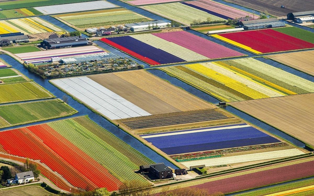 Így festenek felülről a holland tulipánmezők