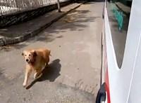 A kórházig követte a gazdáját szállító mentőautót a hűséges kutya – videó