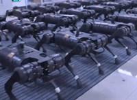 Félelmetes, ahogy egyszerre mozdul meg több tucat kínai robotkutya – videó