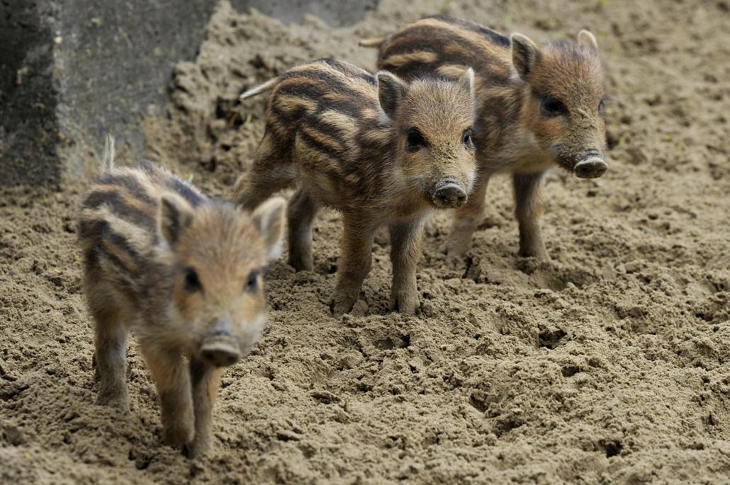 mti. hét képei 2014.04.22. Országos természetvédelmi státuszt kapott a fővárosi állatkert