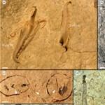 Centis állkapcsa volt a most talált gigantikus ősi féregnek