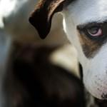Német nő sanyargatott legalább 150 kutyát Zalában